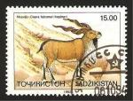 Sellos del Mundo : Asia : Tayikistán : fauna, capra falconeri heptneri