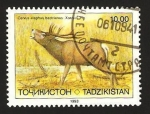 Sellos del Mundo : Asia : Tayikistán : fauna, cervus elaphus bactrianus
