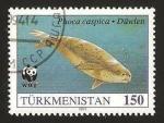 Stamps Asia - Turkmenistan -  fauna, phoca caspica