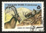 Stamps Asia - Uzbekistan -  fauna, capra sibirica