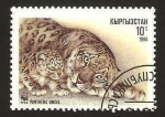 Stamps Asia - Kyrgyzstan -  pantera uncia
