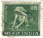 Sellos de Asia - India -  Recogida de la hoja de té