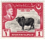 Stamps Asia - Pakistan -  Bodas de plata  1924-1949. Gran toro Sahiwal
