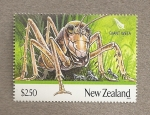 Stamps Oceania - New Zealand -  Grillo gigante