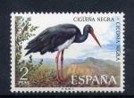 Stamps Europe - Spain -  cigüeña negra