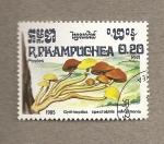 Stamps Asia - Cambodia -  Hongo Gymnopilus spctabilis