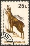 Stamps : Europe : Romania :  cabra montesa