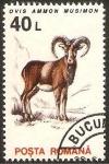 Sellos de Europa - Rumania -  4099 - fauna, muflon europeo