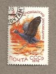 Stamps Russia -  Gallo europeo