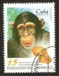 Sellos de America - Cuba -  chimpance