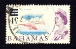 Sellos de America - Bahamas -  Flamenco