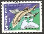 Sellos de Europa - Hungría -  2674 - Peces del mar Negro y Calypso del comandante Cousteau