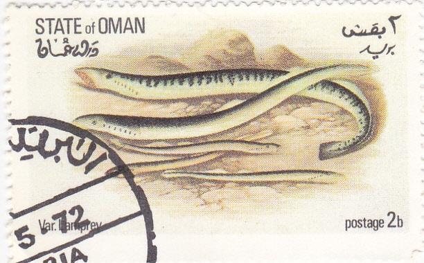 PECES- anguila