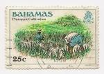 Sellos del Mundo : America : Bahamas : Cultivo de Piñas