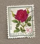Sellos de Europa - Suiza -  Rosa