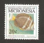 Sellos del Mundo : Oceania : Micronesia : pez, acanthurus guttatus