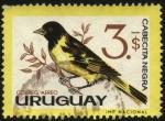 Sellos de America - Uruguay -  Aves autóctonas. Cabecita negra o jilguero.