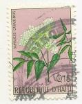 Sellos de America - Haití -  Flores (Sambucus Canadensis)
