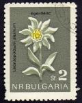 Sellos de Europa - Bulgaria -  Leontopodiim Alpinum