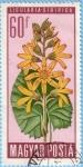 Sellos de Europa - Hungría -  Ligularia Sibirica
