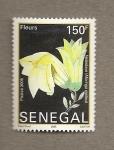 Sellos del Mundo : Africa : Senegal : Flor Moringa oleifera