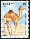 Sellos del Mundo : America : Cuba :  Camelus domedarius
