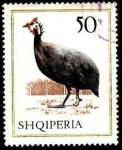 Sellos de Europa - Albania -  Aves domésticas. Gallina de Guinea