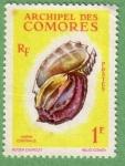 Sellos de Africa - Comores -  Harpa Conoidalis
