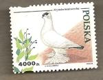 Sellos de Europa - Polonia -  Paloma