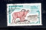 Sellos de Africa - Mauritania -  Carnero de berbería
