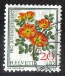 Sellos del Mundo : Europa : Suiza : Austrian Copper Rose (Rosa foetida bicolor)