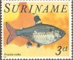 Sellos del Mundo : America : Surinam : PECES.  PRISTELLA  RIDDLEI.