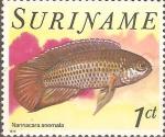 Sellos del Mundo : America : Surinam : PECES.  NANNACARA  ANOMALA.