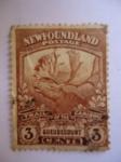 Sellos de America - Isla de Terranova -  Caribú (Rangiter Tarandus) - Newfoundland (Terranova)