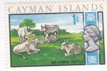Sellos de Europa - Reino Unido -  Toros Brahman- ISLAS CAIMÁN