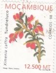 Sellos del Mundo : Africa : Mozambique :  flores- Ximenia Caffra