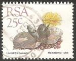 Sellos de Africa - Sudáfrica -  Cheiridopsis
