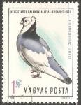 Sellos del Mundo : Europa : Hungría : Pidgeon Exhibition, Budapest 1969-Paloma