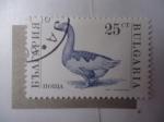 Sellos de Europa - Bulgaria -  Fauna: Pato (Yvert/Bu:3392)