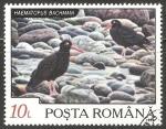 Sellos del Mundo : Europa : Rumania : Haematopus bachmani-ostrero negro norteamericano