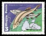Sellos de Europa - Hungría -  Environmental protection of rivers and seas