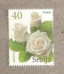 Sellos del Mundo : Europa : Serbia : Rosa