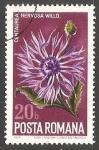 Sellos de Europa - Rumania -  Nervosa Centaurea