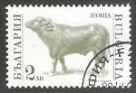 Sellos del Mundo : Europa : Bulgaria : Bos primigenius taurus-toro