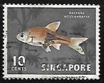Sellos del Mundo : Asia : Singapur : Rasbora heteromorpha