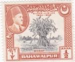 Sellos de Asia - Pakistán -  Trigo-BAHAWALPUR