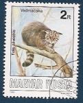 Sellos del Mundo : Europa : Hungría :  Gato Silvestre