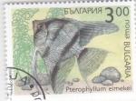 Sellos de Europa - Bulgaria -  peces tropicales- pterophyllum eimekei