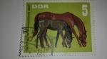 Sellos del Mundo : Europa : Alemania : Caballos /DDR