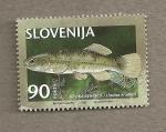 Sellos del Mundo : Europa : Eslovenia : Pez Umbra krameri